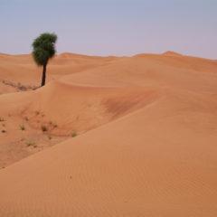 Homily from Feb. 18, 2018: The Desert