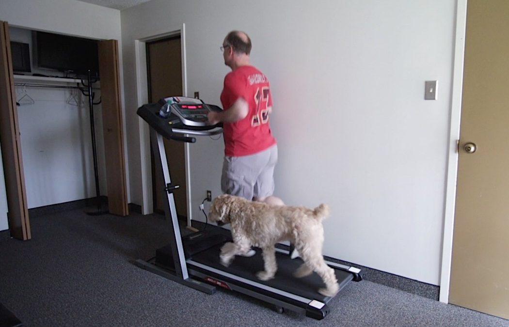 Homily from Oct. 20, 2019: Treadmill